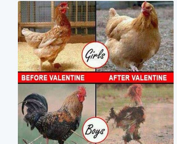 Funny Memes For Lovers : Funny memes and tweets from the trending topic 'valentine's is