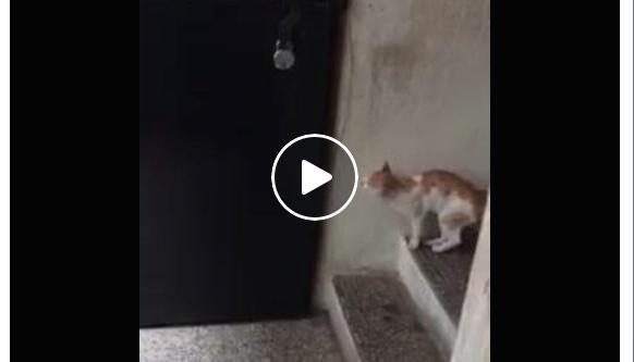 Cat Knocking On Door : Raw video mysterious door knocking cat baffles kenyan public