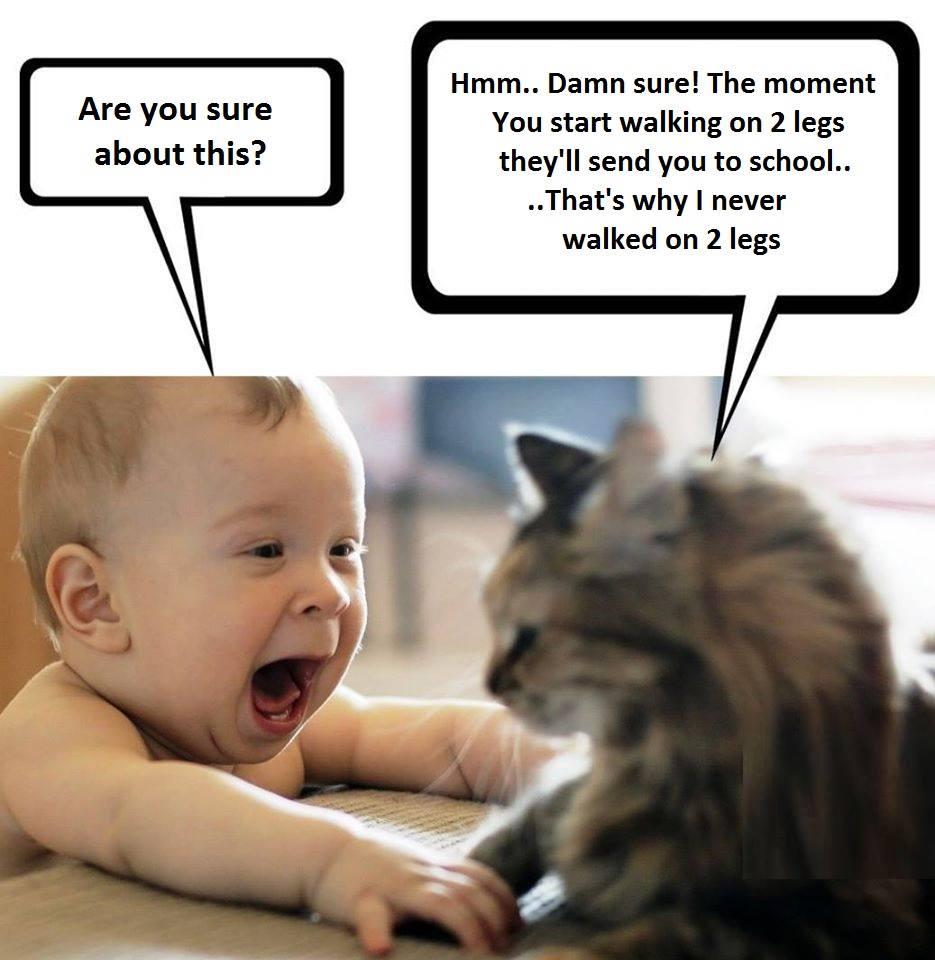 Funniest Meme Compilation : Hilarious meme compilation friday june