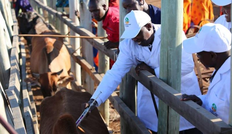 vaccine - Taxpayers Lose Sh92M as Vaccine Expires after Tug of War Over Benchmarking Trip